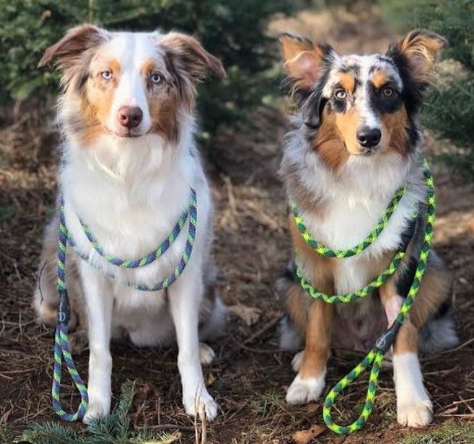 Cute pups showing off their dynamic rope leashes.
